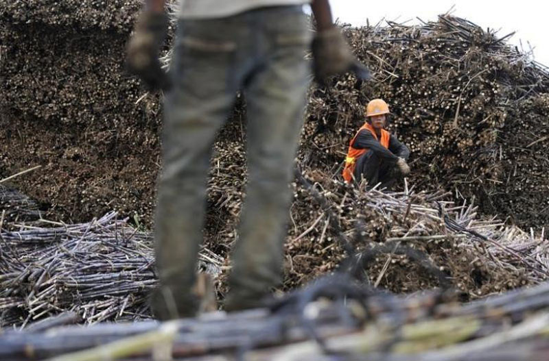 File - Labourers work on piles of sugarcanes at a sugar refinery in Menghai county, Yunnan province, China, on December 6, 2011. Photo: Reuters