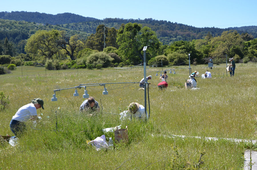 Participants in the Jasper Ridge Global Change Experiment sampled plots of the grassland ecosystem for 17 years. For 17 years with experiments on more than one million plants, scientists put future global warming to a real world test, growing California flowers and grasslands with extra heat, carbon dioxide and nitrogen to simulate a not-so-distant future. The results contradict a common talking point by people who downplay the threat of global warming and reject the science.    Photo: Nona Chiariello/Stanford University via AP