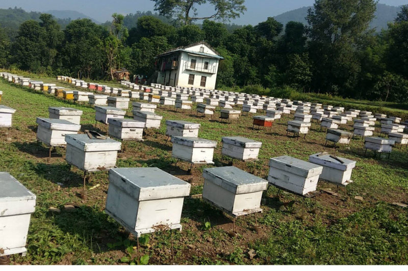 Bee hives kept at a plot of land at Githepani of Dang district. The land has been leased by a bee farm for Rs 65,000 per month for the honey bees to graze. Photo: RSS