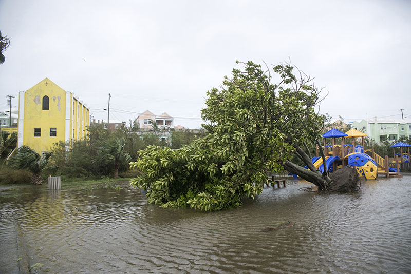 An overturned tree lays on the flooded playground in Mullet Bay, St Georges, Bermuda, on Thursday, October 13, 2016. Photo: AP