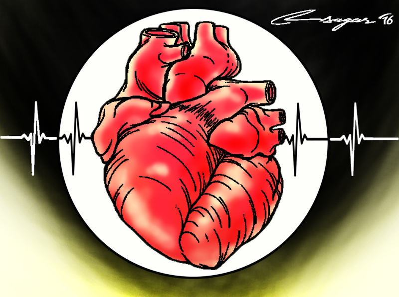 Heart, Heart attack, heart disease