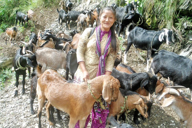 A Chepang girl looks elated after bringing goats from own farm to sell on the occasion of Dashain festival, in Kalikhola of Chitwan district, on Friday, October 7, 2016. Photo: RSS