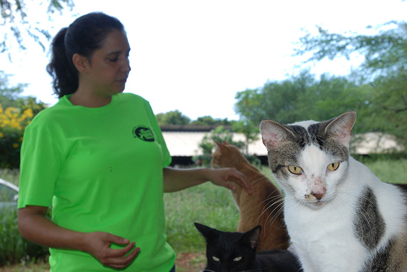 Chris Allejo, the director of operations for the spaying and neutering program run by the animal welfare group Poi Dogs and Popoki, pets cats at feral cat colony near Honolulu on Thursday, September 15, 2016. Photo: AP