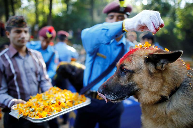Nepali police officers worship a dog during Kukur Tihar, second day of Tihar festival, at the Central Police Dog Training School in Kathmandu, on October 29, 2016. Photo: Reuters