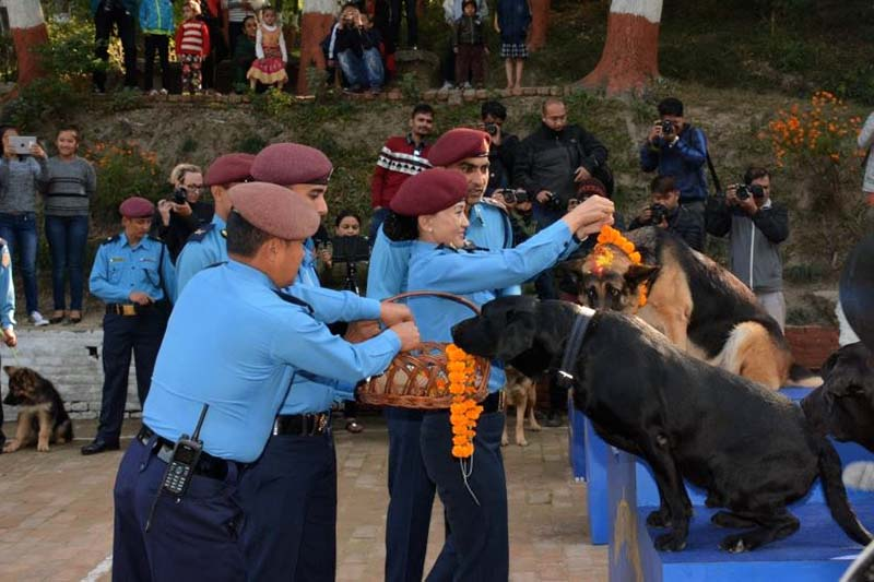 Nepali police officers worship dogs as a part of celebrations of Kukur Tihar at the Central Police Dog Training School in Kathmandu, on October 29, 2016. Photo Courtesy: Nepal Police
