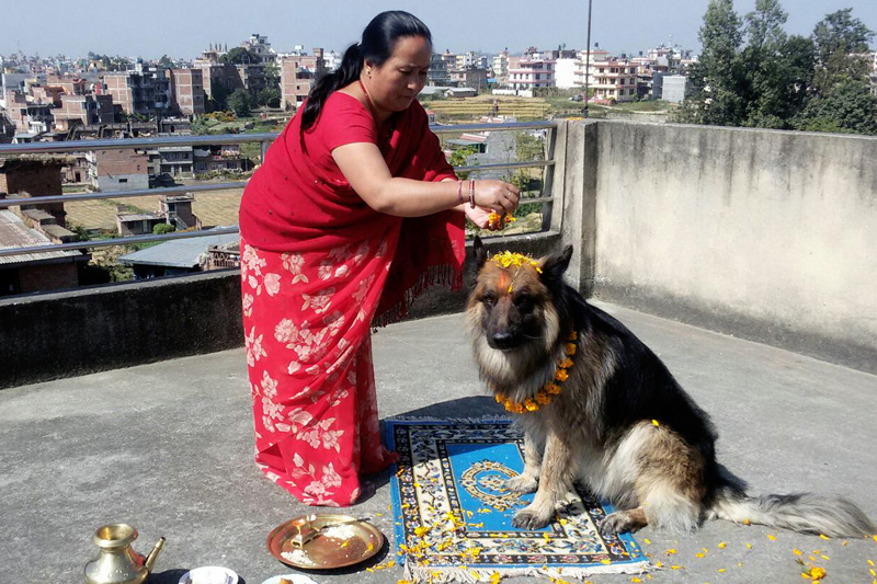 A woman worships a dog as Nepalis, Hindus in particular, marked the annual festival of Kukur Tihar, on Saturday, October 29, 2016. Photo: RSS