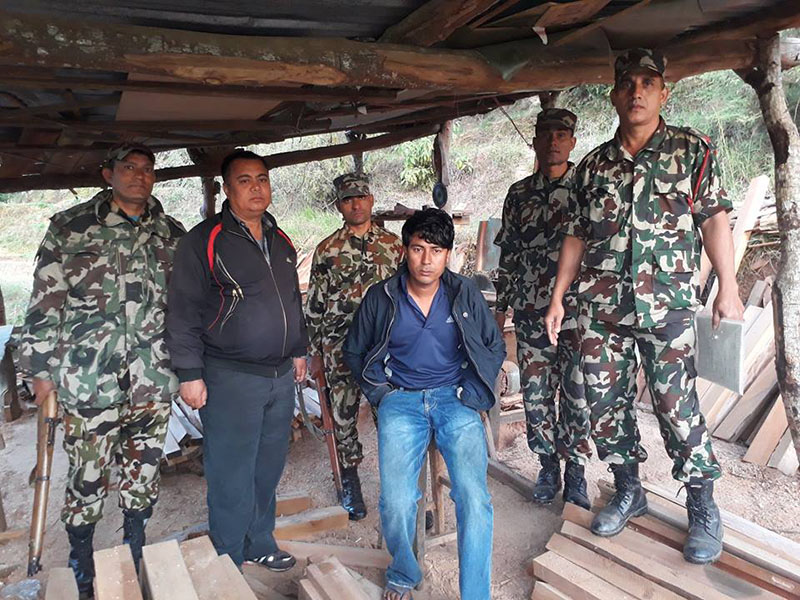 District Forest Office, Dhading arrest the owner of Bhangeridevi Furniture Udhyog, Ram Bahadur Thapa along with 193 cubic feet sal timbers, at Kuwapani, in Dhading district, on Saturday, November 12. 2016. Photo: Keshav Adhikari