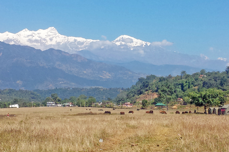 The lack of proper maintenance has turned the Palungtar Airport in Lamjung district into a cattle grazing field, as captured on Wednesday, November 9, 2016. It was considered as one of the oldest airports in the country. Photo: RSS