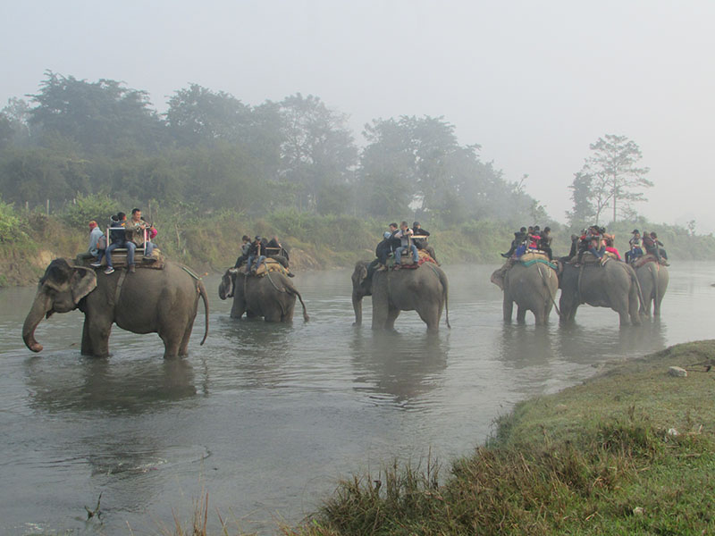 Tourists enjoy elephant ride in Chitwan National Park, Sauraha of Chitwan district on Saturday, November 26, 2016.  Photo: Tilak Rimal