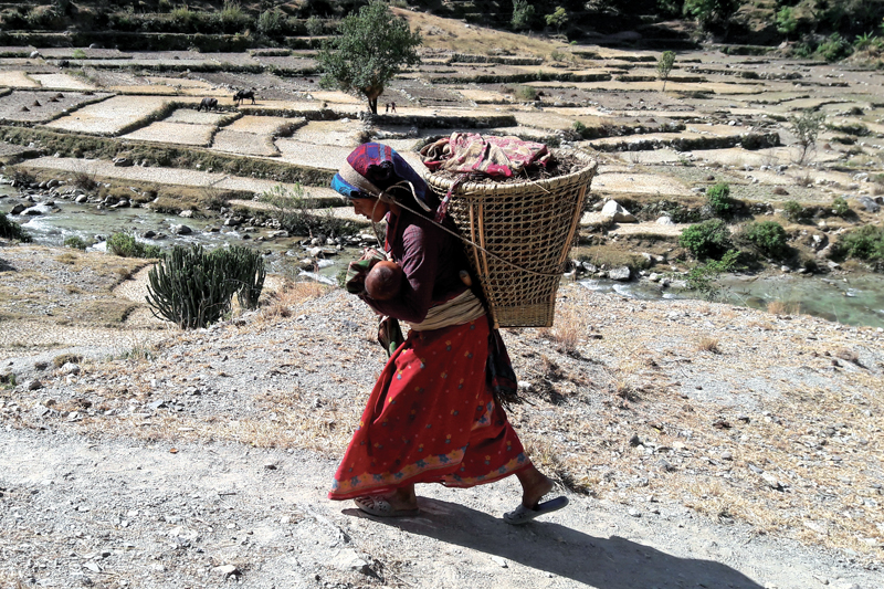 A woman carrying her baby and a wicker basket heading towards a field, at Hyalung VDC, Mugu, on Wednesday, November 9, 2016. Photo: THT