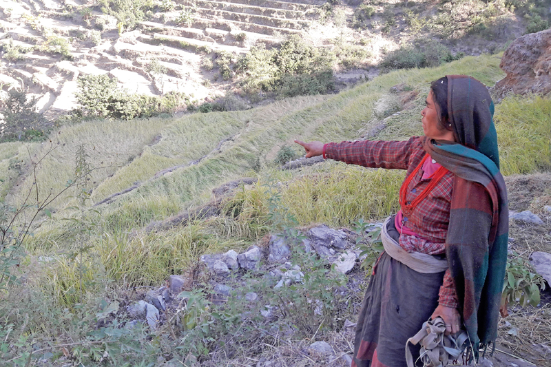 A  local woman stands,  pointing  woefully to her failed paddy crops caused by the prolonged drought, in Mugu, on  Monday, November 7, 2016. Photo: Prakash Singh
