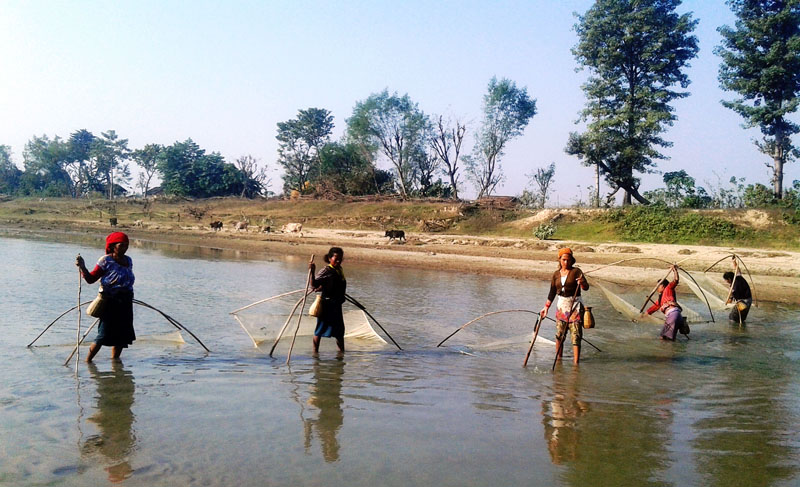 Tharu women fishing in a river in Kanchanpur district on Saturday, November 19, 2016. Photo: RSS