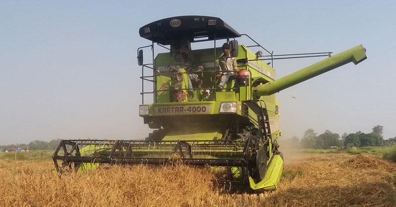 Local farmers using combine harvester to harvest crops in Krishnanagar of Kapilvastu  district, on Saturday, November 5, 2016. Photo: RSS