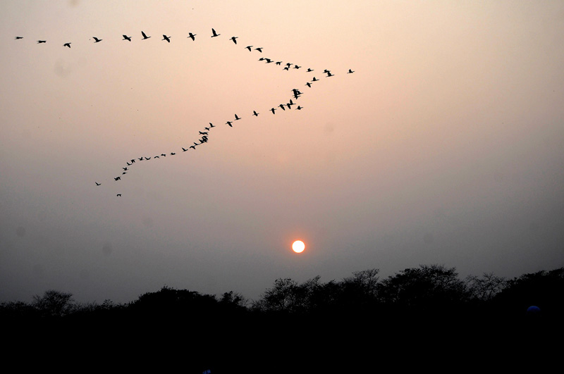 The sunset is pictured with birds flying in the sky from Sauraha of Chitwan district, on Tuesday, December 27, 2016. Photo: Balkrishna Thapa