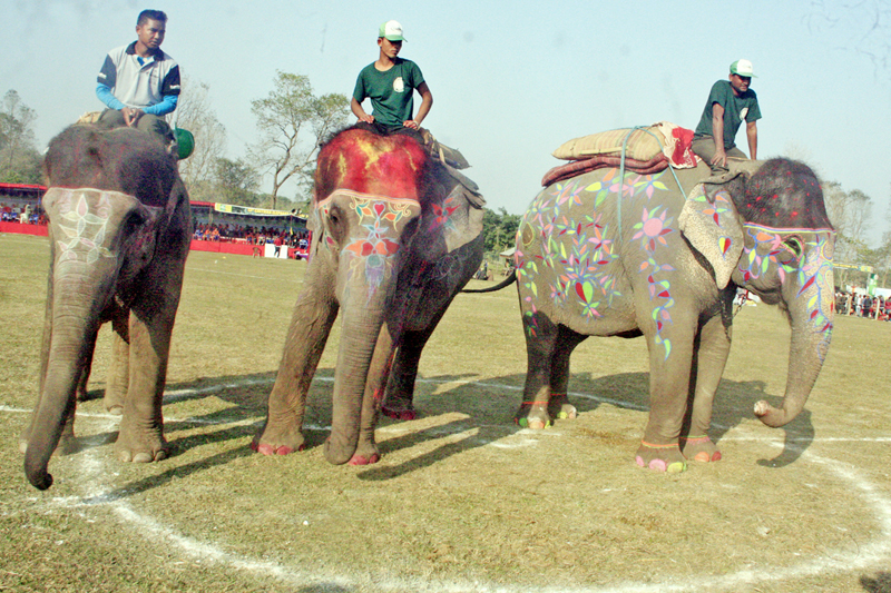Elephants decorated with various colours participate at the Elephant Beauty Contest in Sauraha of Chitwan district, on Thursday, December 29, 2016. Photo: RSS