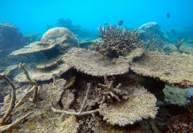 Supplied image of dead table corals killed by bleaching on Zenith Reef, on the northern Great Barrier Reef in Australia, made available to Reuters on November 29, 2016. Greg Torda/Courtesy of ARC Centre of Excellence for Coral Reef Studies/Handout via REUTERS