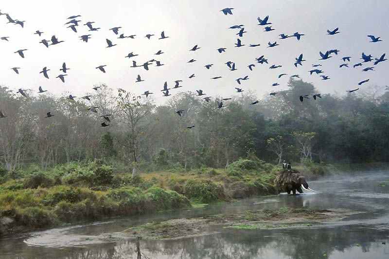 A flock of birds is seen in the backdrop of the Rapti River in Sauhara of Chitwan, on Monday, December 26, 2016. Photo: Bal Krishna Thapa/THT