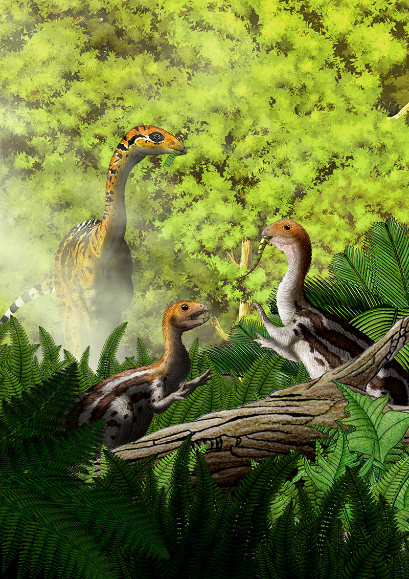 Limusaurus are seen in this illustration, on December 22, 2016.  Photo: Yu Chen/Handout via Reuters