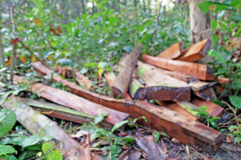 Illegal timber seized at Gaindatar forest area, in Rautahat, on Thursday, December 8, 2016. Smugglers were operating a saw mill and trading in timber illegally in the forest area. Photo: THT