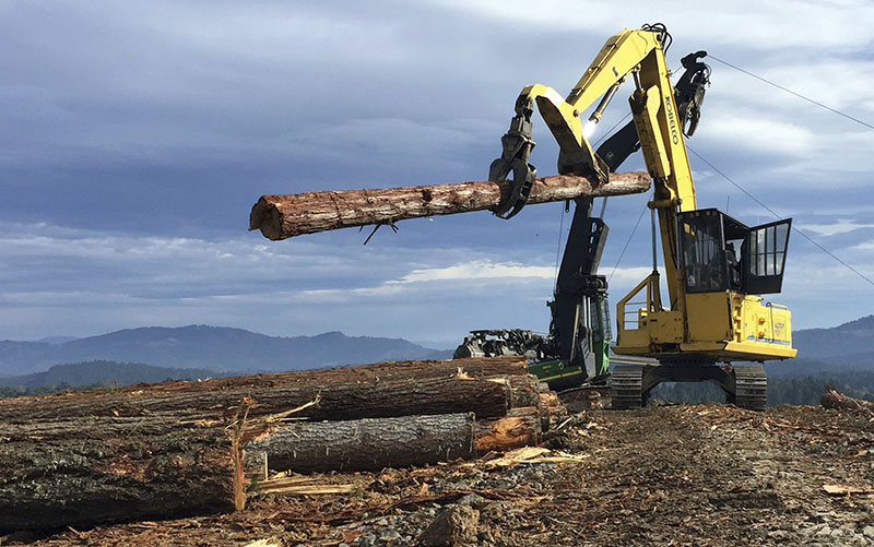 A logging crew harvests new timber on private land near the headquarters of D.R. Johnson Lumber Co, in Riddle, Oreegon, on November 11, 2016. Photo: AP