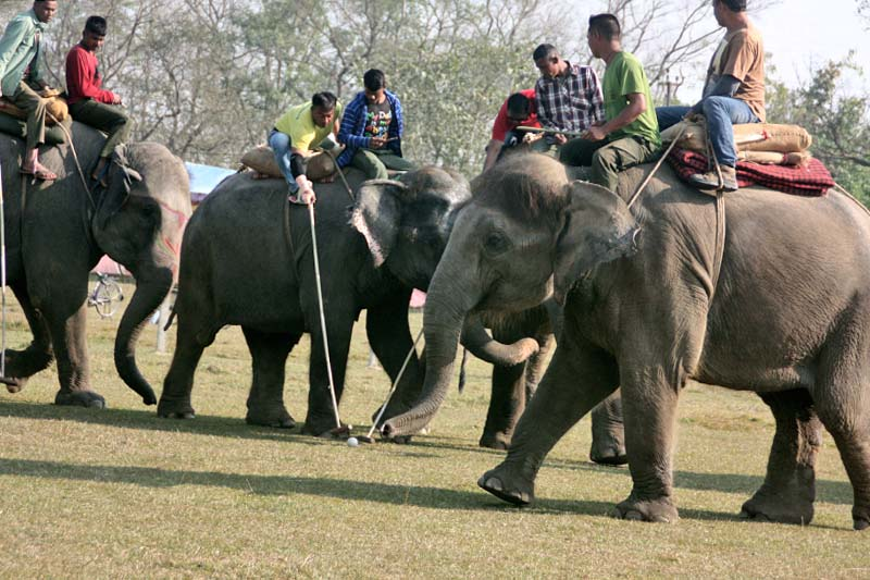 People play the elephant polo in Sauraha of Chitwan, on Sunday, December 25, 2016. Elephant polo is a sport played only in Nepal. Photo: RSS