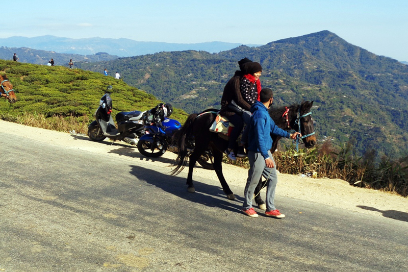 Domestic tourists ride a horse for sightseeing in Kanyam of Ilam district, on Thursday, January 19, 2017. Photo: RSS