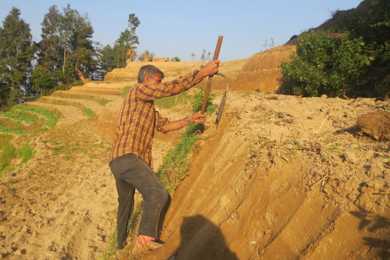 A farmer in Baluwapati village of Kavre district prepares to cultivate potatoes in his farm, on Wednesday, January 25, 2017. Photo: RSS