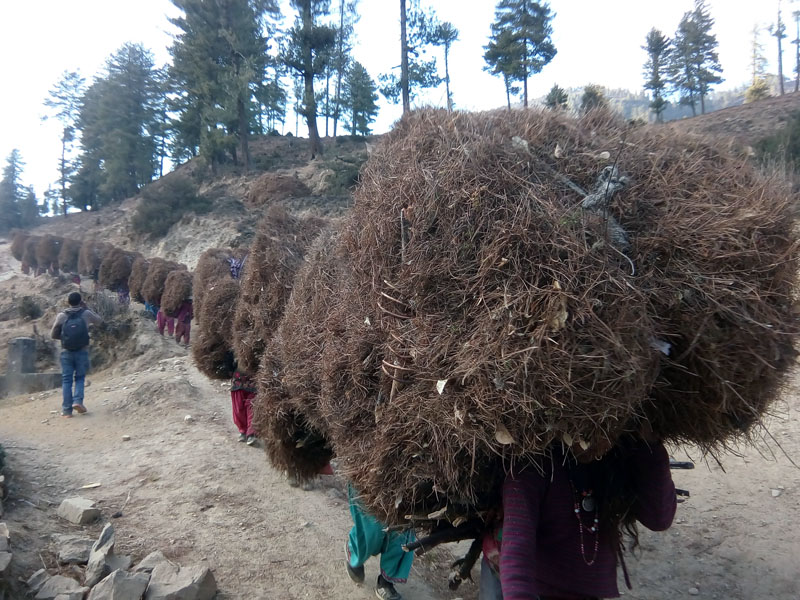 Women from Karkibanda village of Mugu district return home with dry leaves and firewood for domestic purposes from the Rara National Park, on Sunday, January 1, 2017. Photo: RSS