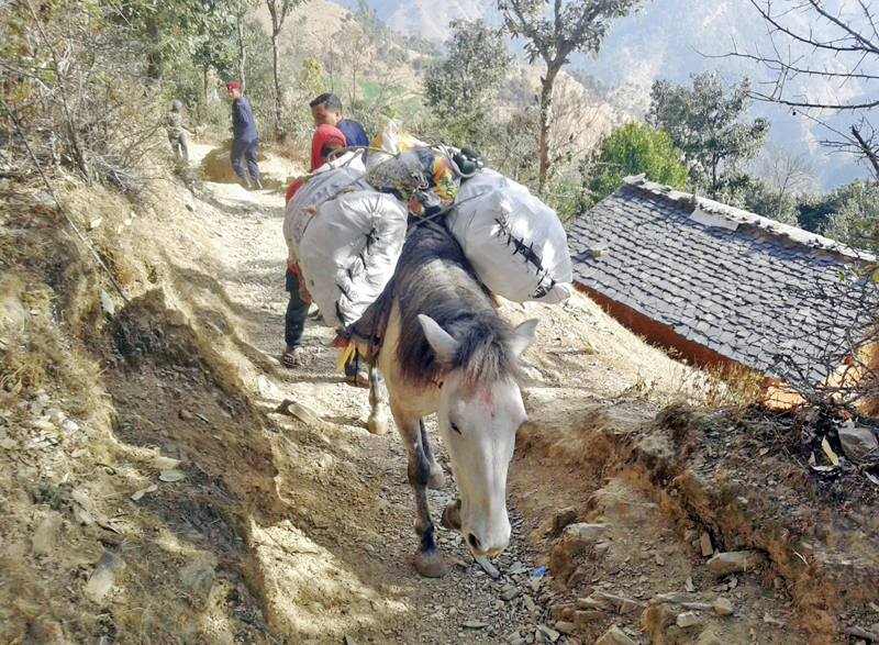 Locals of Durga Bhawani Gaun in Baitadi district use mules to transport essentials due to the lack of motorable roads in the area, on Monday, January 30, 2017. Photo: RSS