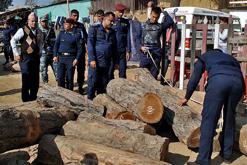 Parsa police count the saal logs they confiscated from Gadi VDC of the district, on Monday, January 2, 2017. Photo: RSS