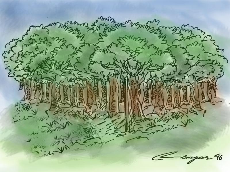 Forestation: Illustration: Ratna Sagar Shrestha/THT