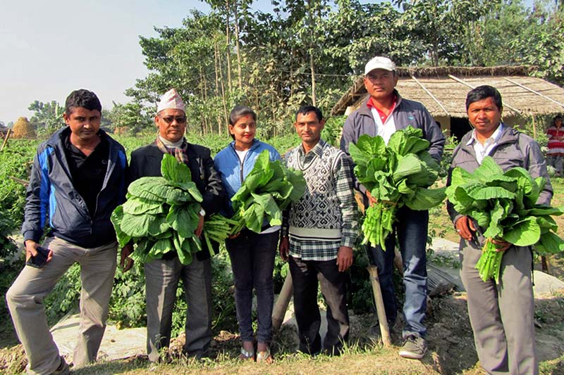 Journalists and farmers show the greens grown organically in Jhumka, Itahari of Sunsari district, on Thursday, January 12, 2017. Photo: RSS