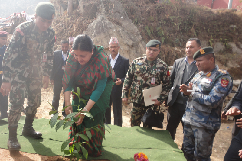 President Bidya Devi Bhandari plants a rudraksha (Elaeocarpus ganitrus) tree, at a school premises in Chandisthan of Lamjung, on Saturday, February 4, 2017. Photo: Ramji Rana
