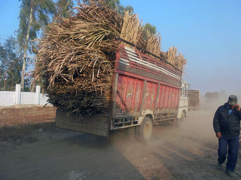 Dusts rise as a truck laden with sugarcane passes along the unpaved road, in Ramnagar of Mahottari district, on Tuesday, February 21, 2017. Photo: RSS