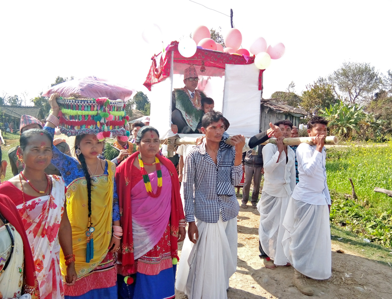 Members of the Tharu community carry a groom on a traditional wodden carrier, following decases-long tradition, in Pipaladi of Kanchanpur district, on Monday, February 6, 2017. Photo: RSS