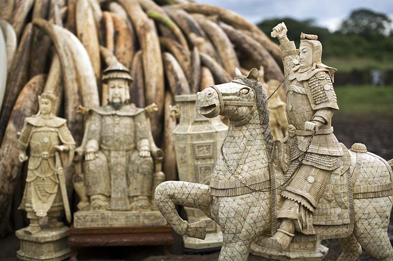 Confiscated ivory statues stand in front of one of around a dozen pyres of ivory, in Nairobi National Park, Kenya, on Thursday, April 28, 2016. Photo: AP/File