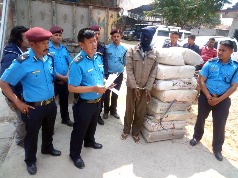 Police arrests an Indian national in possession of 307 kilograms of Marijuana from Manahari of Makawanpur district on Thursday, March 16, 2017. Photo: Prakash Dahal