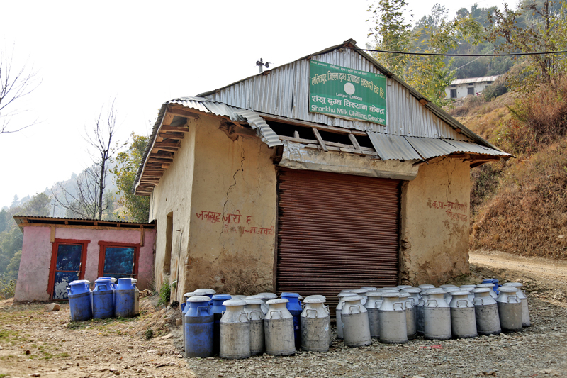 Milk cans processed from a chilling vat are being sent to a market in Sankhu of Lalitpur district, on Friday, March 3, 2017. Photo: RSS