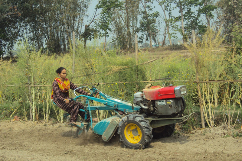 A woman uses a powertiller to plough her farm in Morang district, on Friday, March 10, 2017. Photo: RSS