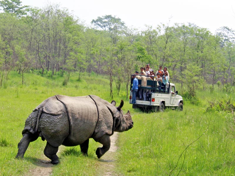 File -  Tourists on jeep safari watching one-horned rhino crossing a trail in the Chitwan National Park, on Friday, March 24, 2017. Photo: RSS