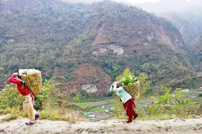 Women are seen taking their vegetable products in wicker baskets to a nearby market in Myagdi district, on Sunday, March 19, 2017. Photo: RSS