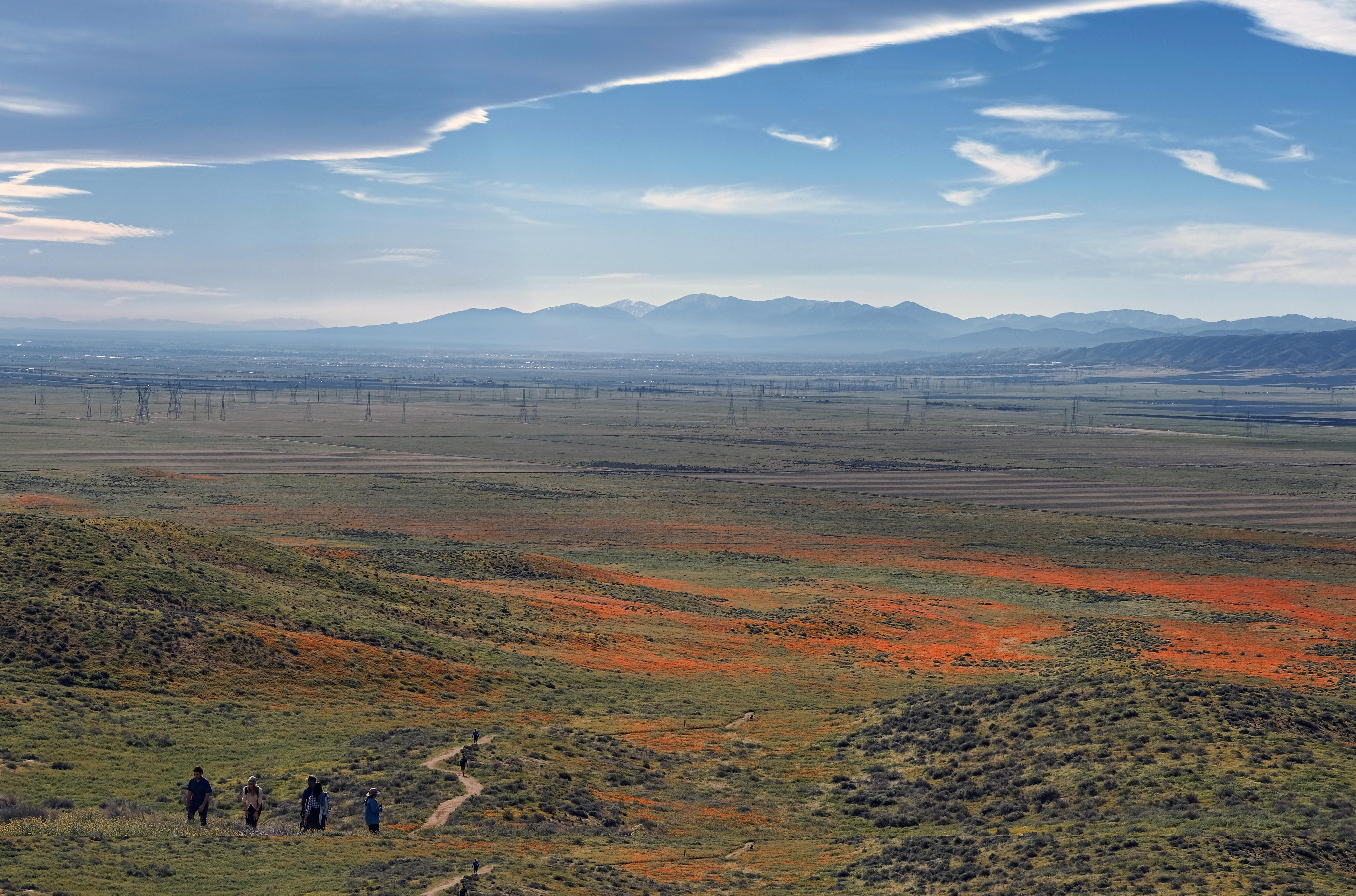 Visitors walk among the poppy bloom at Antelope Valley California Poppy Reserve in Lancaster, California, on March 19, 2017. Photo: AP