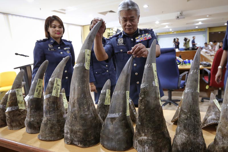 Kuala Lumpur International Airport (KLIA) customs director-general Hamzah Sundang (center), inspects the rhino horns that were seized at KL International airport during a press conference in Custom office in Sepang, Malaysia on Monday, April 10, 2017. A total of 18 Rhino horns weight of 51kg (112 pound) with a value of US$ 3.1 million were confiscated on April 7 from Mozambique to Kuala Lumpur via Doha. (AP Photo/Vincent Thian)