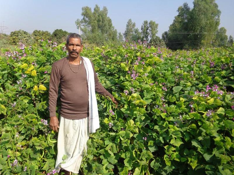 A local farmer showing his vegetable farm at Golbazaar Municipality, in Siraha, on Monday, april 17, 2017. Photo: THT