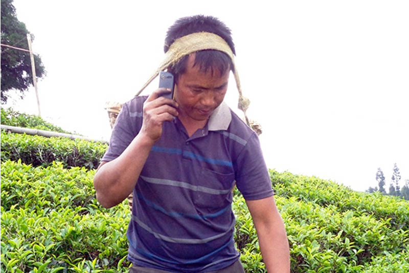 A labourer talks in cellphone as he picks up tea leaves at a tea garden in Ilam district, on Thursday, May 4, 2017. Photo: RSS