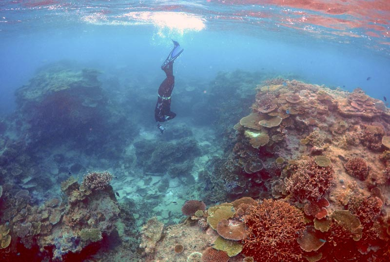 Oliver Lanyon, Senior Ranger in the Great Barrier Reef region for the Queenlsand Parks and Wildlife Service, takes photographs and notes during an inspection of the reef's condition in an area called the 'Coral Gardens' located at Lady Elliot Island and 80 kilometers north-east from the town of Bundaberg in Queensland, Australia, on June 11, 2015. Photo: Reuters