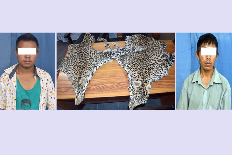 Polcie make public Deepak Rai (L) and Jagat Kumar Rai in possession with the leopard hides in Kathmandu, on Tuesay, June 20, 2017. Photo: MCD
