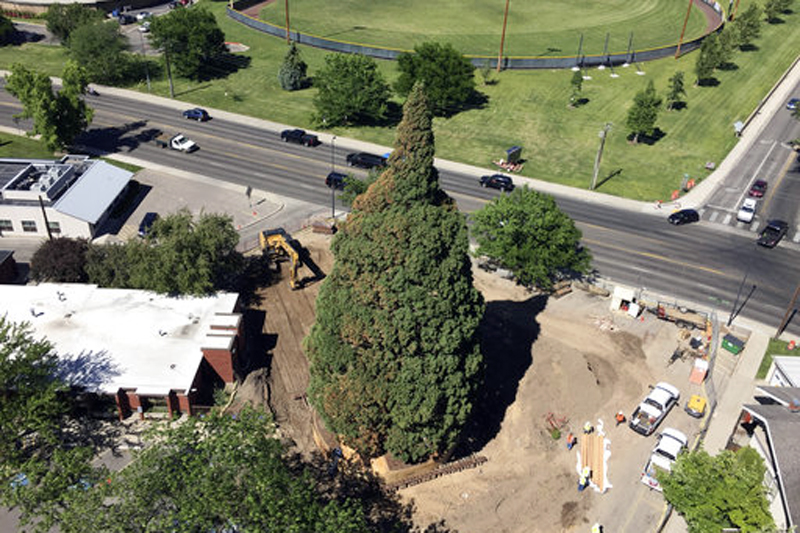 An aerial view shows heavy machinery used by workers as they pruned the roots, built a burlap, plywood and steel-pipe structure to contain the rootball so they can move the roughly 100-foot sequoia tree in Boise, Idaho, Thursday, June 22, 2017. Photo: AP