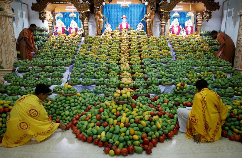 Priests arrange mangoes offered by devotees to Hindu God Swaminarayan during a mango festival at a temple in Ahmedabad, India, on June 3, 2017. Photo: Reuters