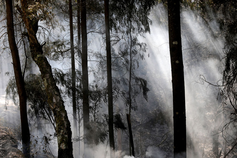 Smoke from a forest fire is seen through trees in Alto da Louriceira, Portugal,  June 21, 2017. Photo: Reuters
